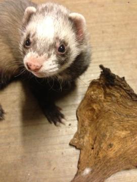 Post Oak Bark and Ferret